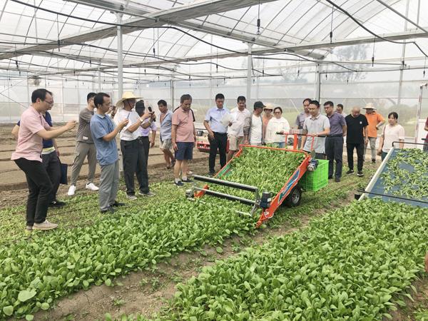 闵行区举行绿叶菜全程机械化作业现场观摩会