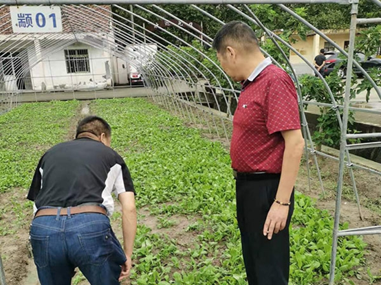 闵行加强农业技术指导 抓紧恢复农业生产
